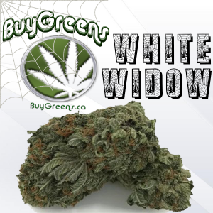 White Widow-BuyGreens.ca
