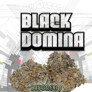 Black Domina - BuyGreens.Online