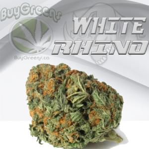White Rhino-BuyGreens.ca