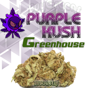 Purple Kush Greenhouse - BuyGreens.online