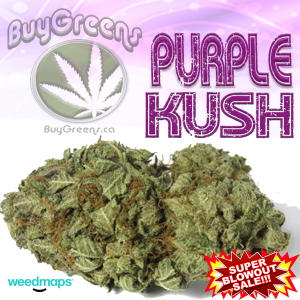 Purple Kush-BuyGreens
