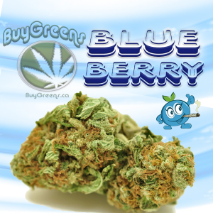 BlueBerry-BuyGreens