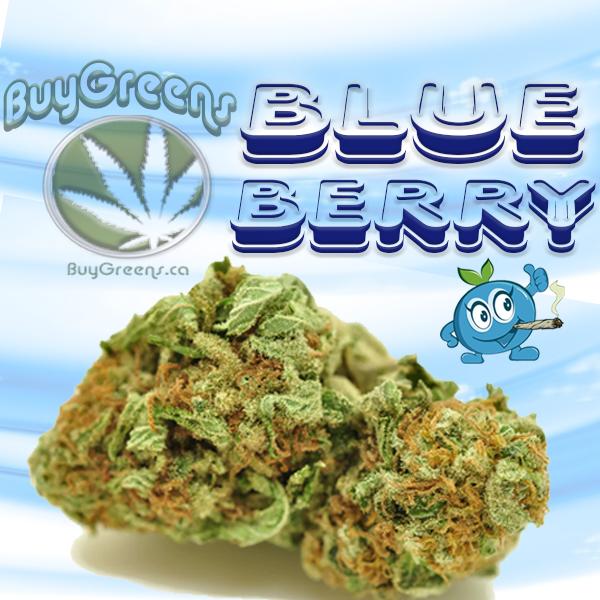 Blueberry Kush - BuyGreens.ca
