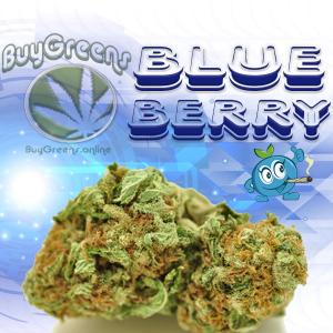 Blueberry - BuyGreens