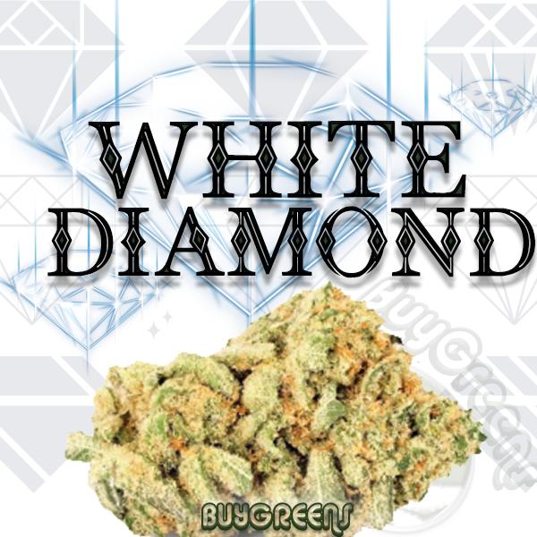 White Diamond - BuyGreens.online
