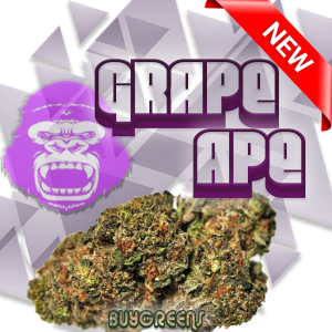 Grape Ape - BuyGreens.Online