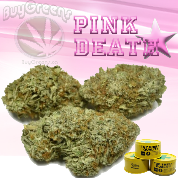 Pink Death Star by BuyGreens.ca