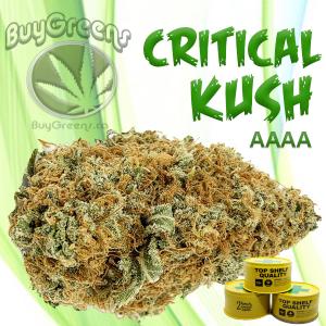 Critical Kush - BuyGreens.ca