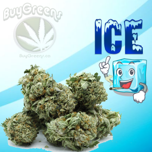 Ice - BuyGreens.ca
