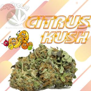 Citrus Kush - BuyGreens