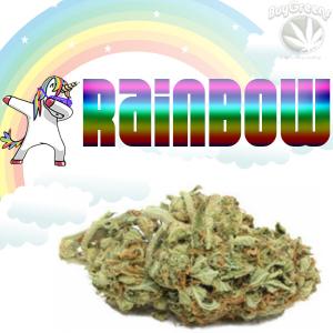 Rainbow - BuyGreens