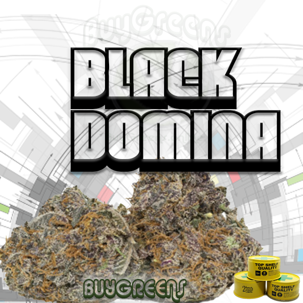 Black Domina - BuyGreens