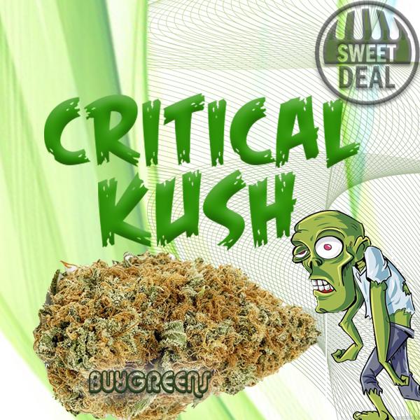 Critical Kush - BuyGreens.Online