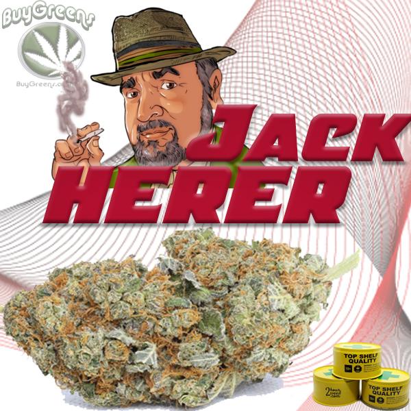 Jack Herer AAAA - BuyGreens