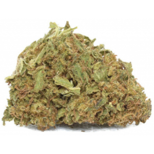 White Shark - Greeenhouse - Buygreens.online