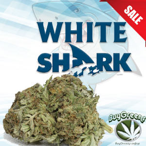 White Shark - BuyGreens.online