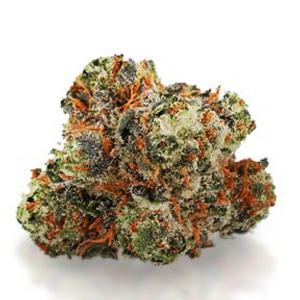 Black Russian - BuyGreens.Online