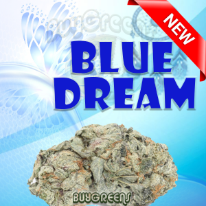Blue Dream - BuyGreens.online