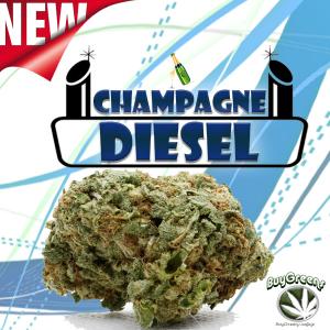 Champagne Diesel - BuyGreens.Online