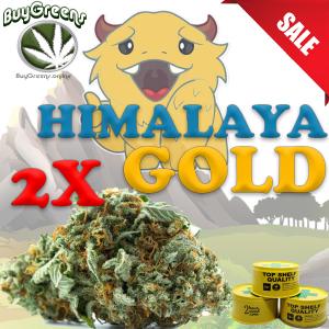 Himalaya Gold x2 - BuyGreens.online