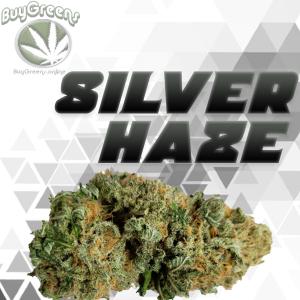 Silver Haze - BuyGreens.online