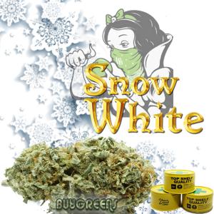 Snow White - BuyGreens.Online