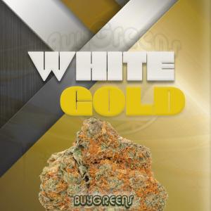 White Gold - BuyGreens.onilne