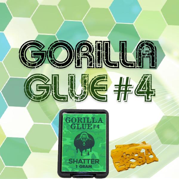 Gorilla Glue #4 Shatter - BuyGreens.Online